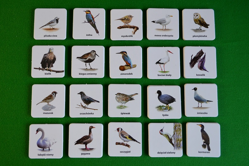 Ptaki 2 Jacobsony